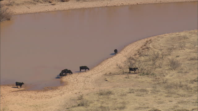ws aerial zo view of cattle at ponds / texas, united states - medium group of animals stock videos & royalty-free footage