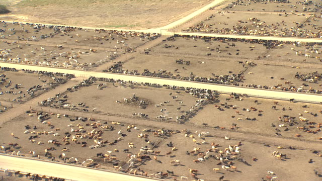 ws aerial ds view of cattle feed lot in san juan county / new mexico, united states - rind stock-videos und b-roll-filmmaterial