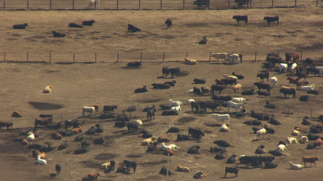 WS AERIAL View of cattle pen at Pratt Army Airfield / Kansas, United States
