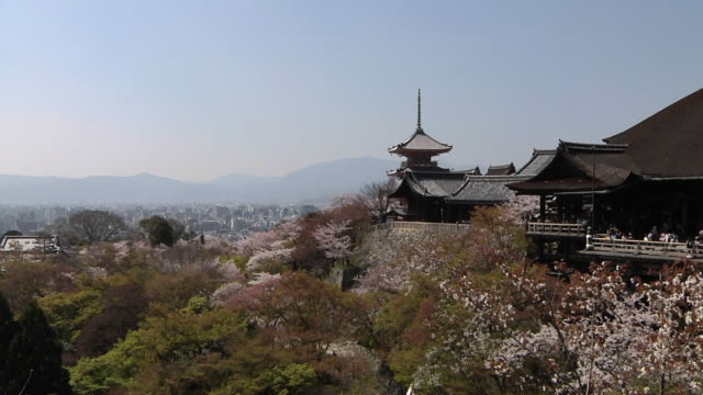 ws view of cherry blossom at kiyomizu-dera / kyoto, japan - japan stock videos & royalty-free footage