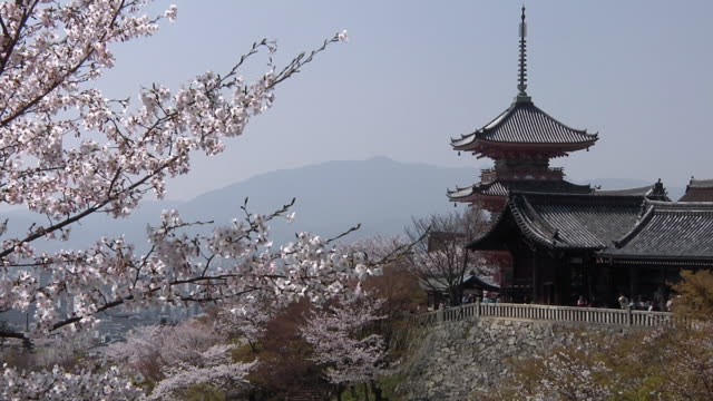 ws view of cherry blossom at kiyomizu-dera / kyoto, japan - kyoto temple stock videos and b-roll footage