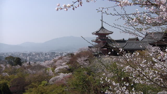 ws view of cherry blossom at kiyomizu-dera / kyoto, japan - kyoto stock videos and b-roll footage
