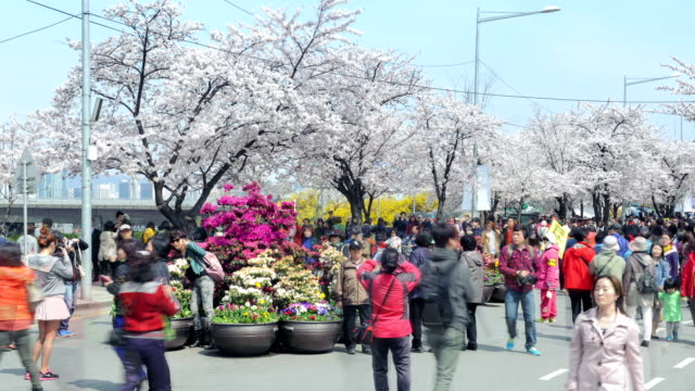 vídeos de stock e filmes b-roll de view of cherry blossom festival and people at yunjungno road in yeouido in spring - árvore de folha caduca