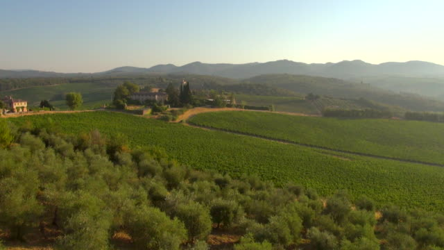 WS AERIAL View of Chianti olive grove and vinyards at Castello di Bossi / Siena, Tuscany, Italy