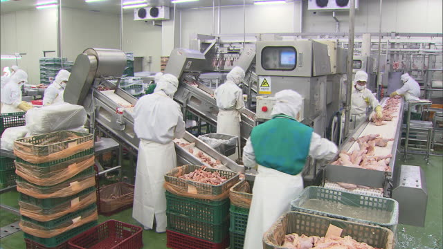 view of chicken processing plant and production line workers in south korea - 肉点の映像素材/bロール