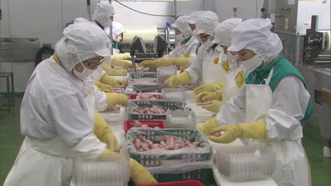 view of chicken processing plant and production line workers in south korea - raw food stock videos & royalty-free footage