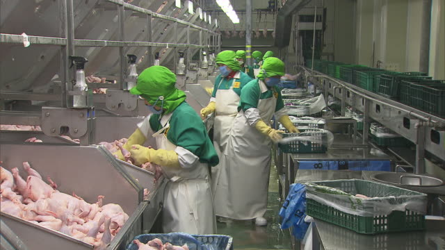 view of chicken processing plant and production line workers in south korea - butcher stock videos & royalty-free footage