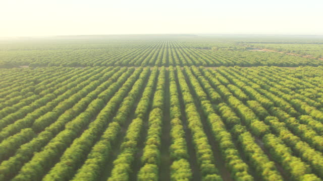 stockvideo's en b-roll-footage met ws aerial view of citrus groves in collier county / florida, united states - boomgaard