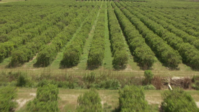 stockvideo's en b-roll-footage met ms aerial tu view of citrus orchards over sky / lake okeechobee, florida, united states - boomgaard