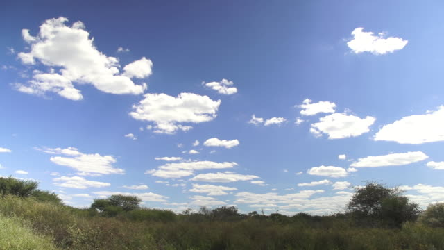 vidéos et rushes de ws view of clean blue sky with clouds and tree at landscape / d2440, otjiwarongo, namibia - wiese