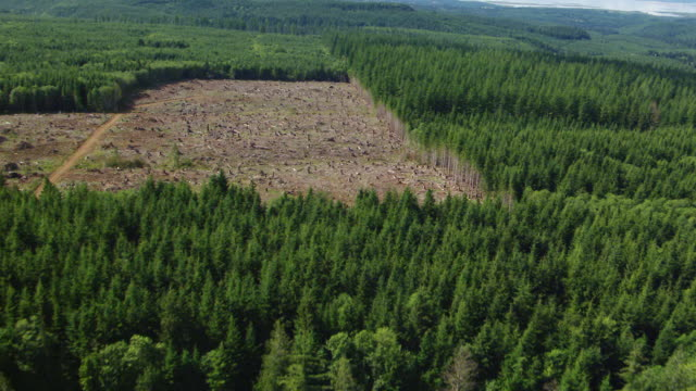 WS AERIAL View of clearcut area of evergreen forest / Oregon, United States