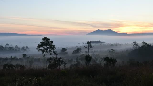 雲や霧台紙 rainer の基地で木のてっぺんの間のビュー/タイ、ペッチャブーン - 静かな情景点の映像素材/bロール