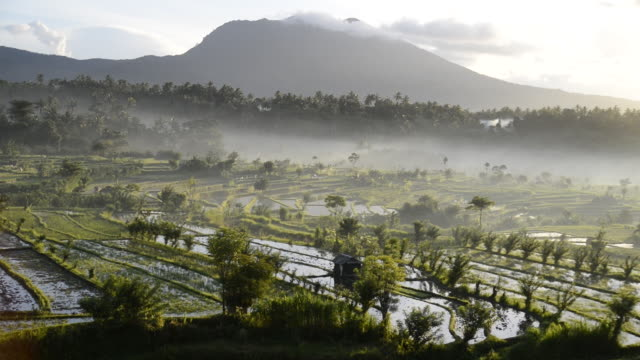 WS View of clouds low down over rice fields at sunrise / Tirta Ganga, Indonesia