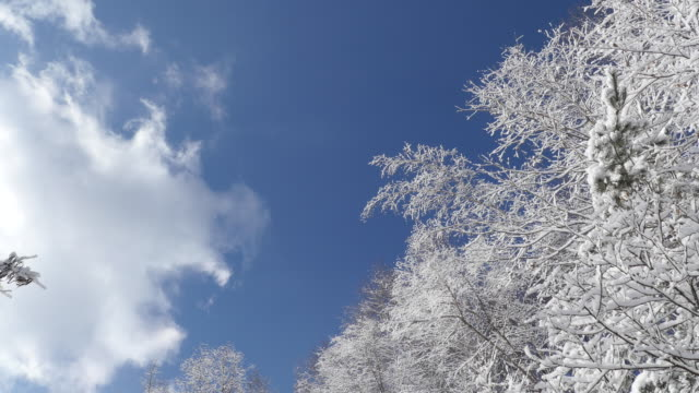 View of cloudscape and snow-covered white birch trees