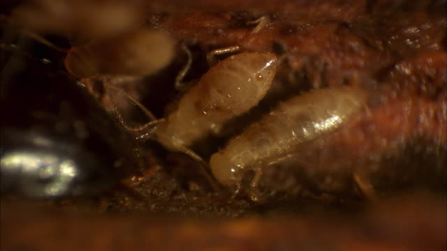 view of cockroach caterpillars - cockroach stock videos & royalty-free footage