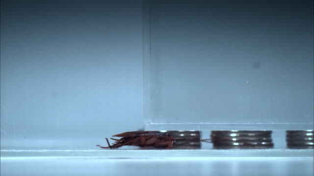 view of cockroach crawling into narrow gap - cockroach stock videos & royalty-free footage