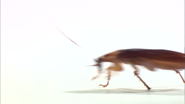 view of cockroach crawling - cockroach stock videos & royalty-free footage