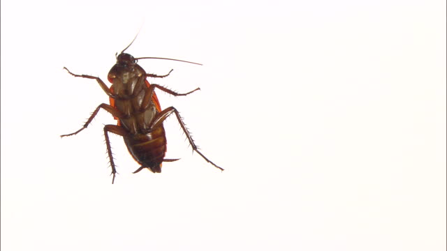 View of Cockroach crawling