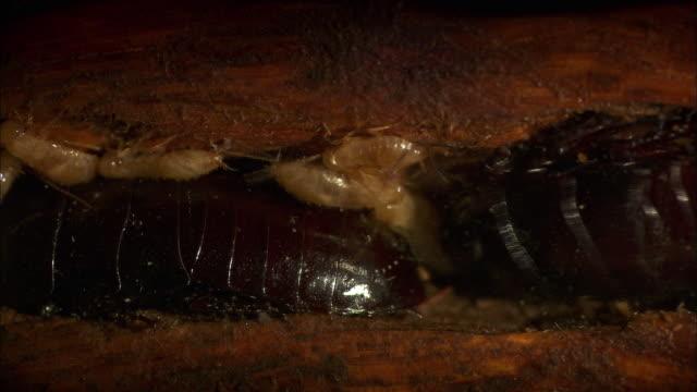 view of cockroach on tree and its caterpillar - ゴキブリ点の映像素材/bロール