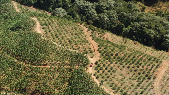 WS AERIAL POV View of coffee field / Lares, Puerto Rico, United States