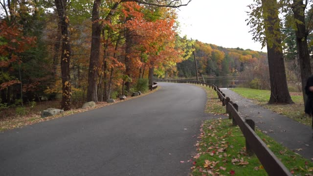 a view of colorful trees on the hills of new hampshire with its natural beauties wilderness and colors in new hampshire during autumn on october 26... - autumn stock videos & royalty-free footage