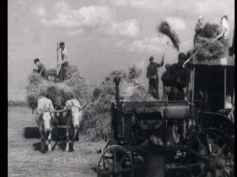 vídeos de stock e filmes b-roll de view of combine harvester at work in steppe and farmers collecting wheat on ox-drawn carts, women in sugar beet field / russia, audio - alimento básico