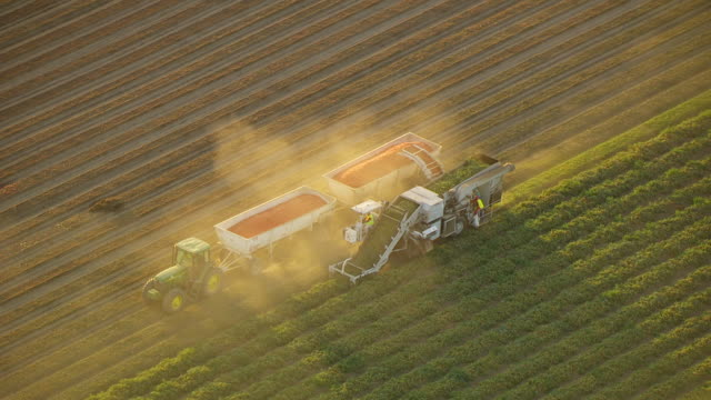 WS PAN AERIAL POV View of combine harvester harvesting crop from farm near San Joaquin Valley / Helm, California, United States
