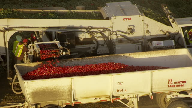 ms pan aerial pov view of combine harvester harvesting tomatoes from farm near san joaquin valley / helm, california, united states - 収穫する点の映像素材/bロール
