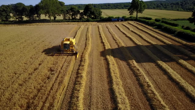vidéos et rushes de view of combine harvester near teversal, mansfield, nottinghamshire, england, united kingdom, europe - cadrage aux genoux