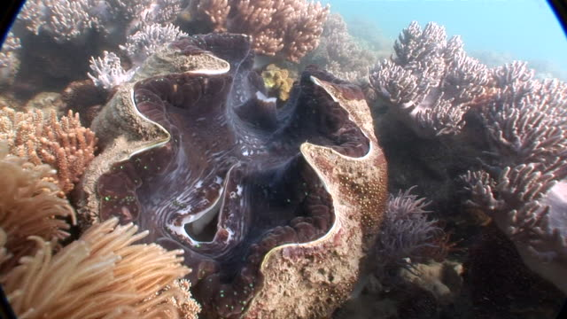 MS View of coral in underwater  AUDIO/ Queensland, Australia