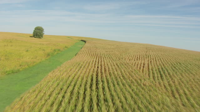 ws aerial pov view of corn field landscape / freeport, illinois, united states - illinois stock-videos und b-roll-filmmaterial