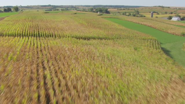 WS AERIAL POV View of corn field with farmhouse / Stephenson County, Freeport, Illinois, United States
