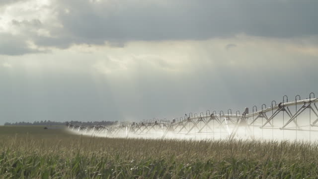 stockvideo's en b-roll-footage met ws td view of cornfield and watering system / haviland, kansas, usa - kansas