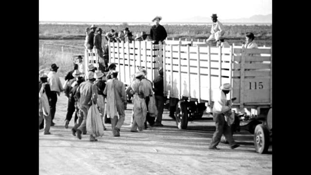 view of cotton field with row of white tents in the distance / mexican african american and white workers with bags / truck with carts attached /... - mexican ethnicity stock videos & royalty-free footage