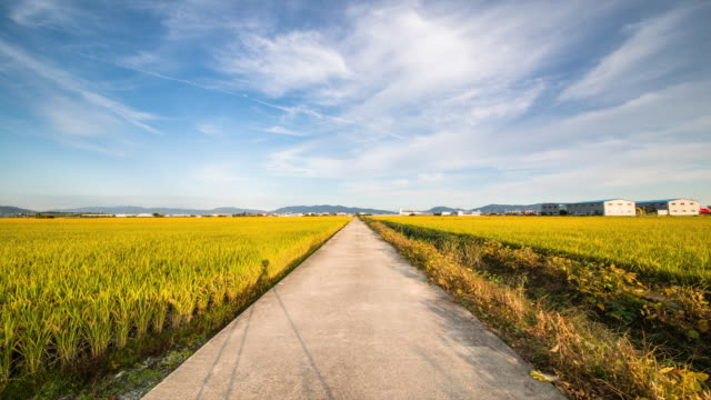 view of country road between gold rice paddy in the gimhae plain - freie straße stock-videos und b-roll-filmmaterial