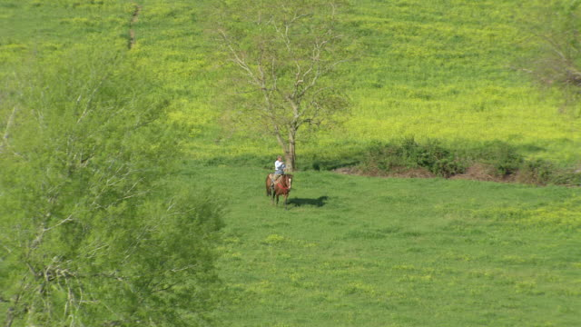 ws aerial view of cowboy riding horse walks through pasture / louisiana, united states - tierfarbe stock-videos und b-roll-filmmaterial