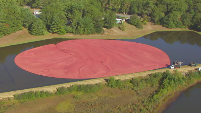 ws zi aerial pov view of cranberry farm with farmer harvesting in bog/ carver, plymouth county, massachusetts, united states - cranberry stock videos & royalty-free footage