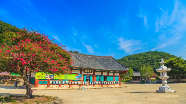 ls t/l view of crepe myrtle tree in paved yard of seonunsa temple / gochang, jeollabuk do, south korea - crepe myrtle tree stock videos and b-roll footage