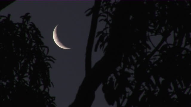 ms cu view of crescent moon through trees / madagascar - crescent stock videos & royalty-free footage