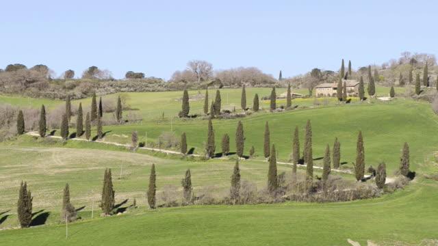 WS View of Cypress avenue on green Tuscany Hill / Pienza, Tuscany, Italy