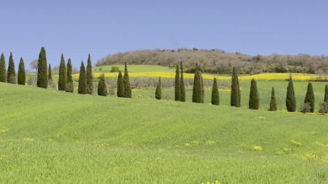ws view of cypress avenue on green tuscany hill / pienza, tuscany, italy - kulle bildbanksvideor och videomaterial från bakom kulisserna