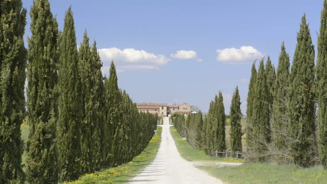 ws view of cypress tree avenue leads to country house / asciano, tuscany, italy - herrenhaus stock-videos und b-roll-filmmaterial