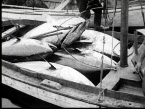 vídeos y material grabado en eventos de stock de b/w pan view of dead tuna in fisherman boat, united states / audio - atún animal