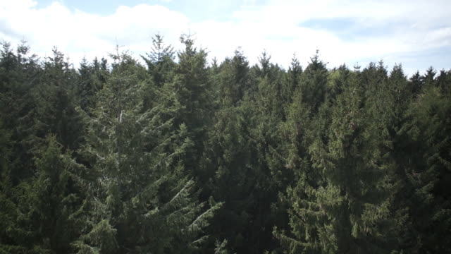 WS POV View of deciduous and coniferous forest in Southern Germany