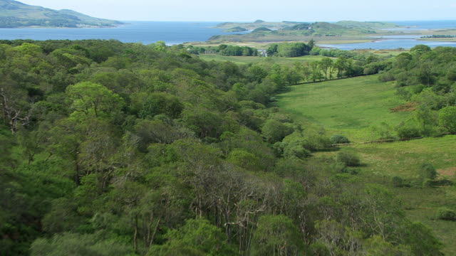 vídeos de stock e filmes b-roll de ws aerial tu td view of deciduous oak woods in taynish national nature reserve in spring with house in idyllic location and islands of west coast beyond fill frame with water at end / tayvallich, argyll and bute, scotland - carvalho