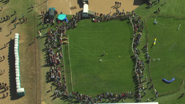 ms ds zo aerial view of dog and owner performing and crowd watching at scottish irish highland festival / estes park, colorado, united states - hundeartige stock-videos und b-roll-filmmaterial