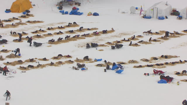 ws aerial view of dogs resting at finger lake checkpoint during iditarod trail sled dog race / alaska, united states - rassehund stock-videos und b-roll-filmmaterial