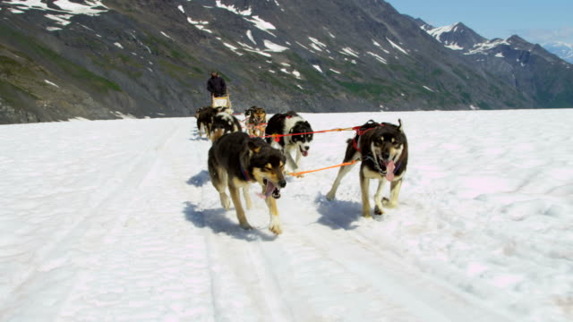 view of dogsledding teamwork huskies chugach mountains alaska - malamute stock videos and b-roll footage
