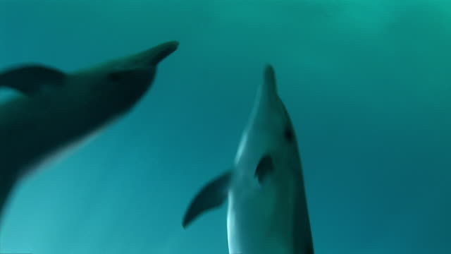 ms pov view of   dolphin swimming  audio / florida, united states - dolphin stock videos & royalty-free footage