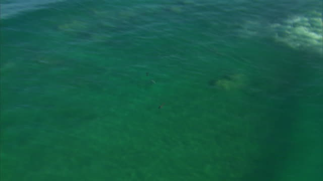 ws zi aerial view of dolphins swimming in algoa bay / port elizabeth, eastern cape, south africa - cetacea stock videos & royalty-free footage